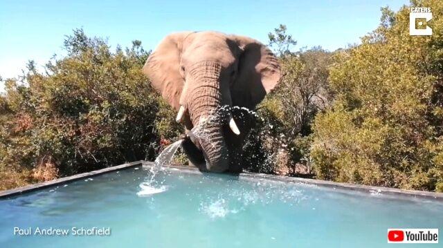elephants2_640