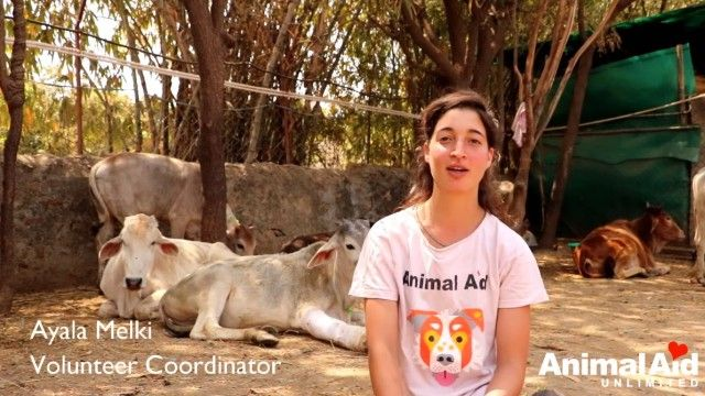 volunteeringatanimalaid11_e