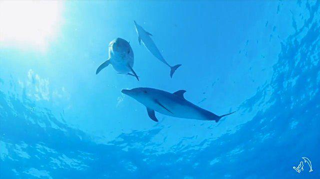 dolphininvitation1_e