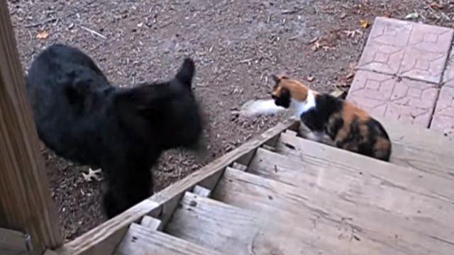 catnbear4