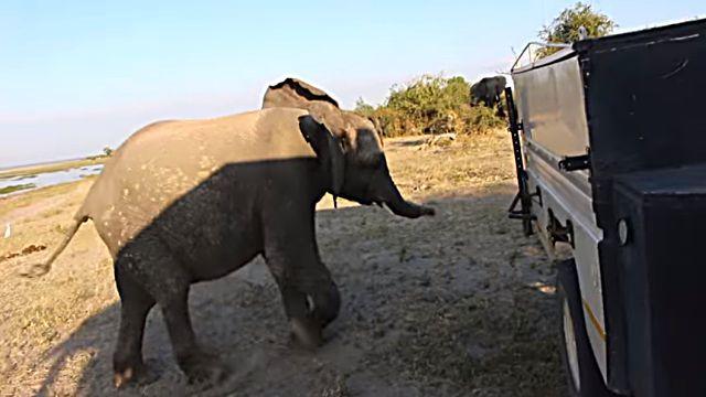 elephantkick2