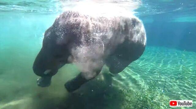 elephant3_640