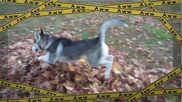 husky-4 [www-frame