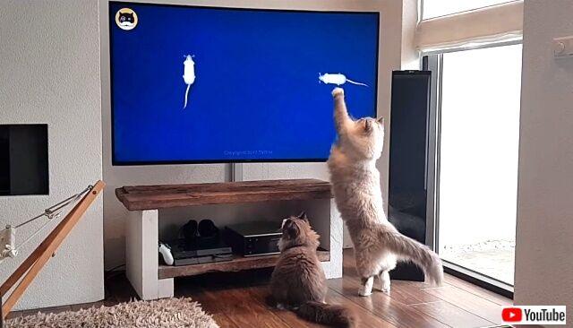 tv4cats5_640
