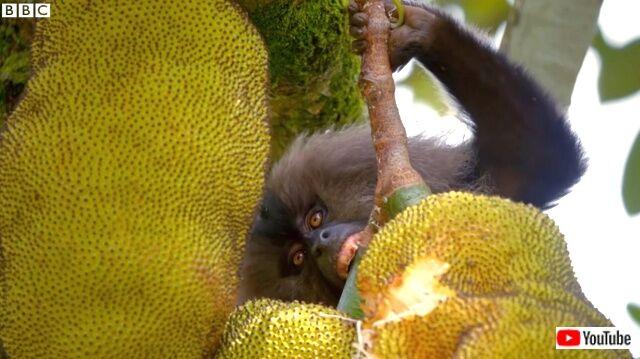 macaquesnsquirels9_640
