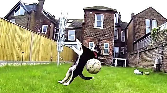 dogfailer1