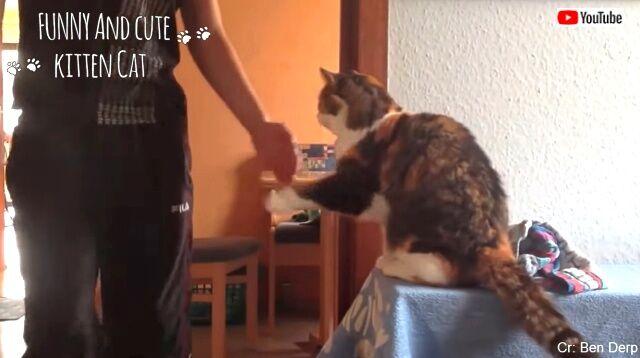 lifewithcats01_640