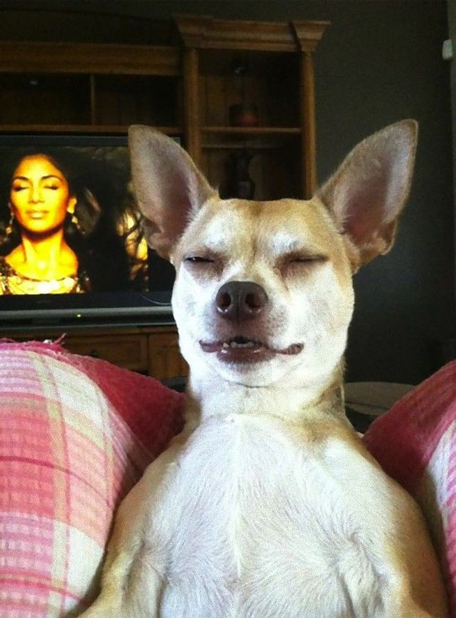 perfectly-timed-photos-dogs-20_e