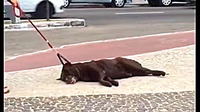 lazydog1