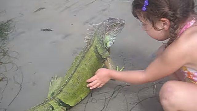 iguanabeach5