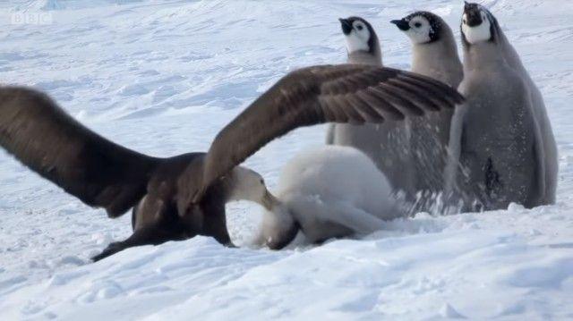 penguinchicks4_e