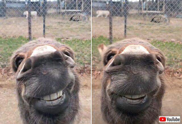 donkey4_640