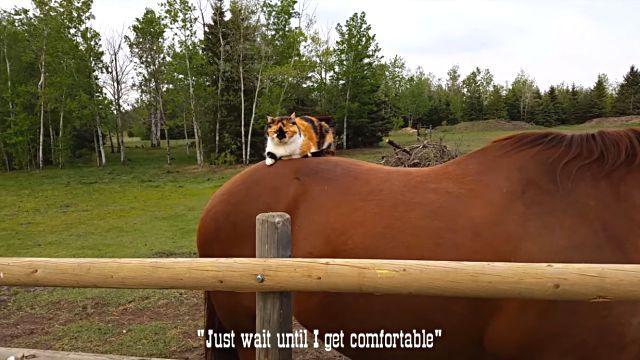 horsetaxi0