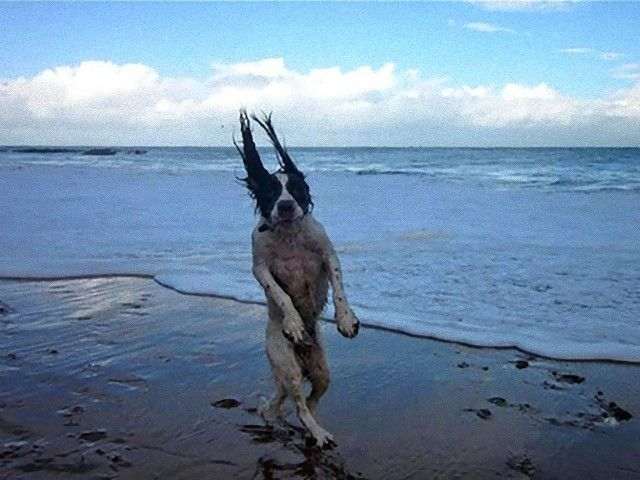 perfectly-timed-photos-dogs-7_e