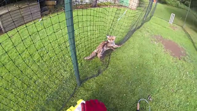 foxrescue2