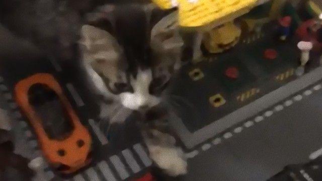町に大怪獣が現れた!猫型怪獣だけどっと。レゴでできた町を歩く猫の様子に関する海外の反応