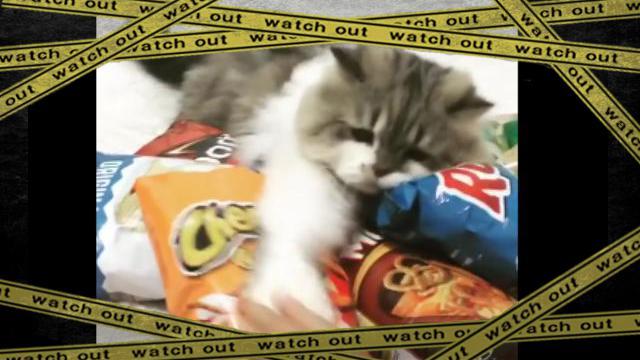CAT-F [www-frame (1)