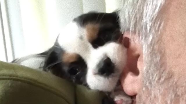 puppy-f_e
