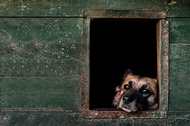 kennel-club-dog-photographer-competition-2017-24_e