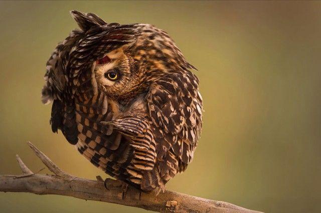 owl-photography-1__880_e