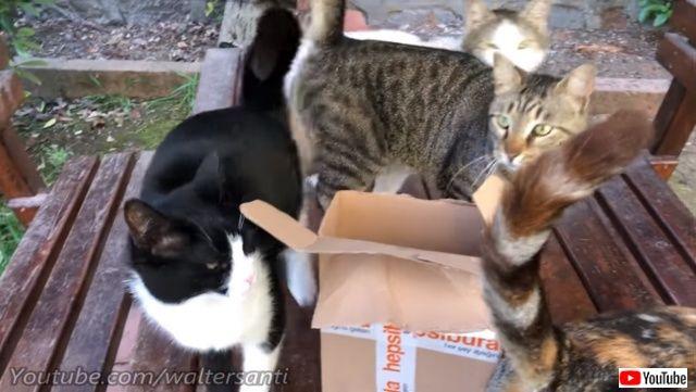 catsgarden4_640