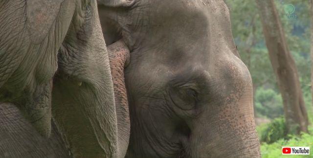 blindelephant1_640