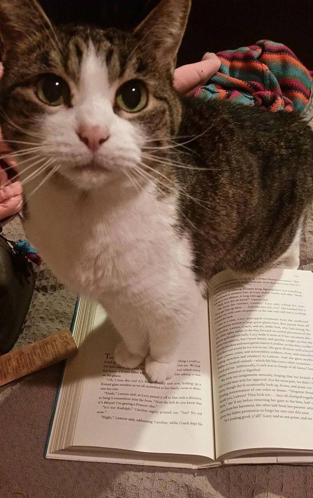 cats-vs-reading6_e