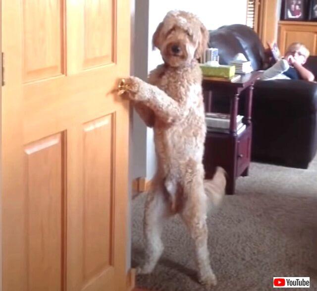 funniestdogs1_640