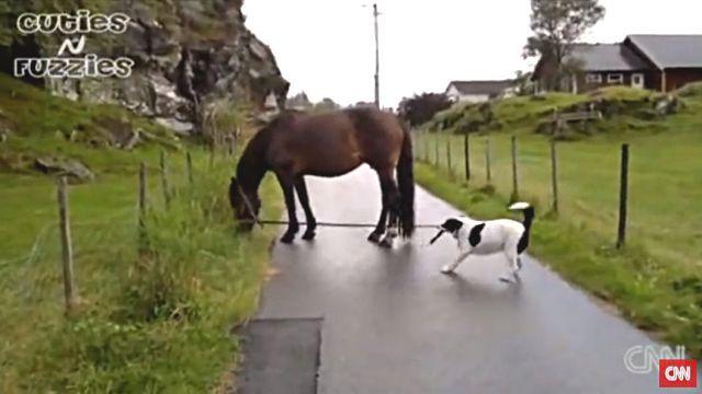 dogpullshorse4