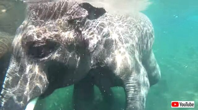 elephant5_640