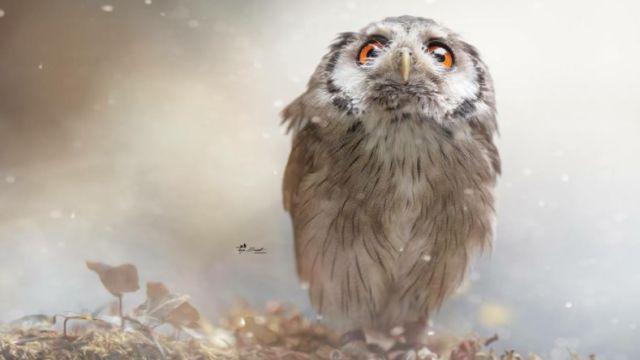 owlfantasy-a