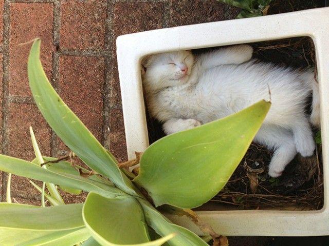 cat-plant2a_e