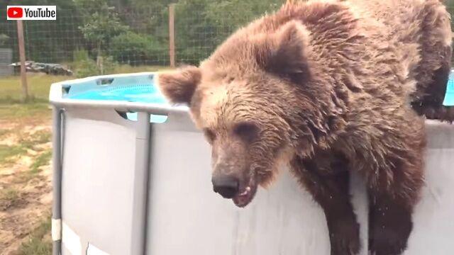 beargoes4swim4_640