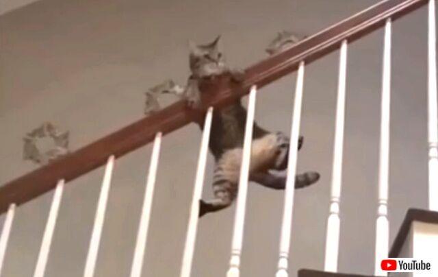 funniestcats6_640