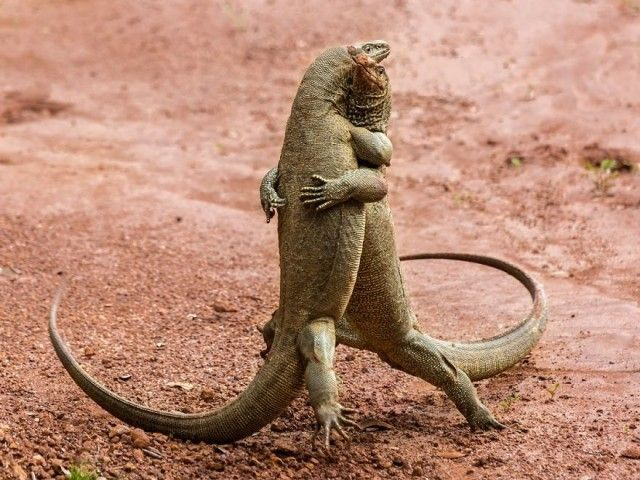 comedy-wildlife-photography-awards-finalists-2018-2- (4)