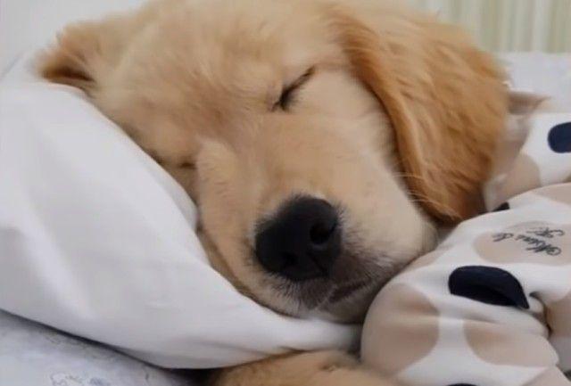 sleepingpuppy3_e