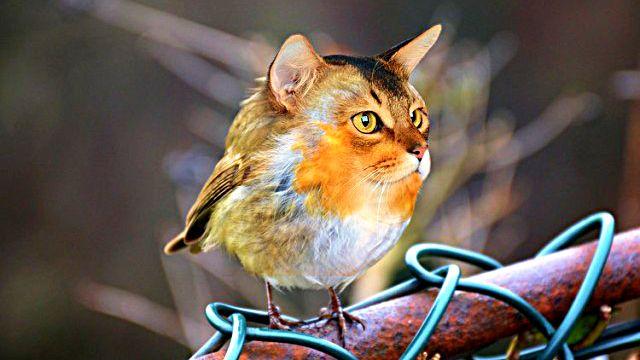 cat-bird_ea