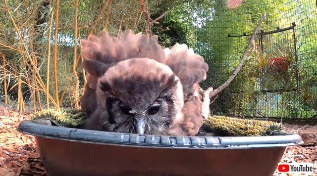 owl5_640