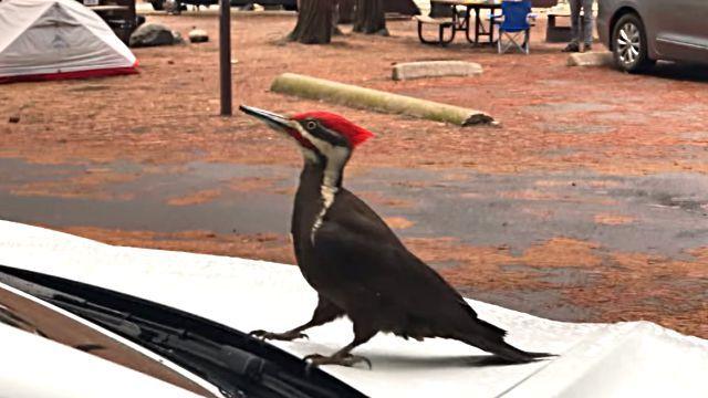 Woodpecker0