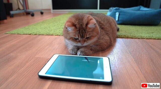 games4cats3_640