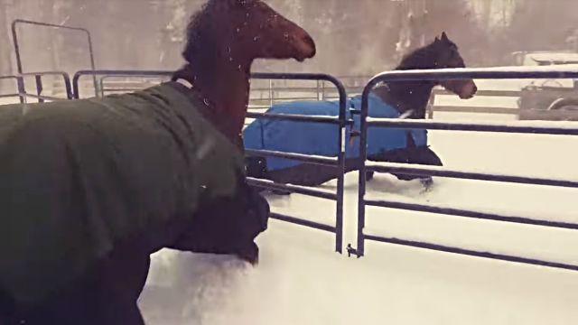 horseregret3