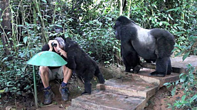gorillafamily1