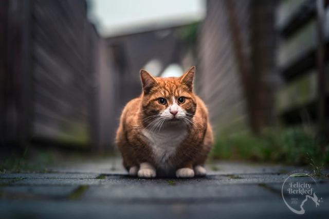 cat-6-3 [www.imagesplitter.net]