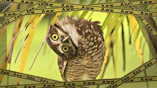 owl-photography-6__880_ea-frame