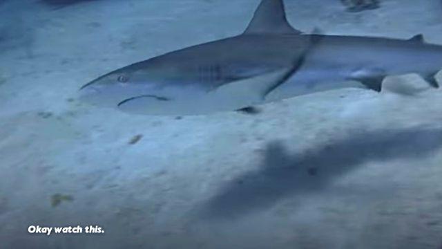 dolphinshark11