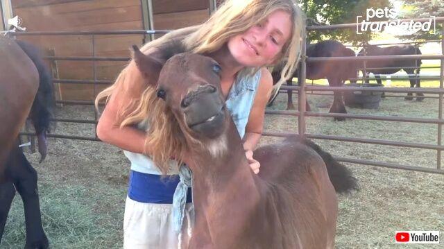 horse1_640