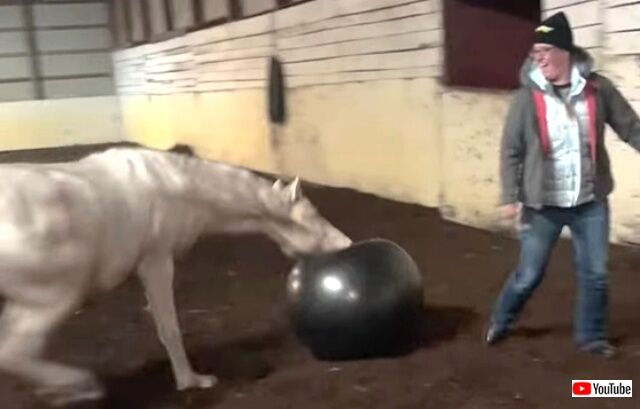 horsenball4_640