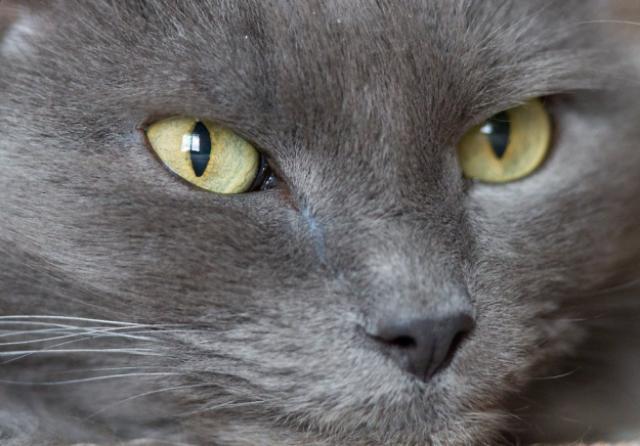eyes-7 [www.imagesplitter.net]