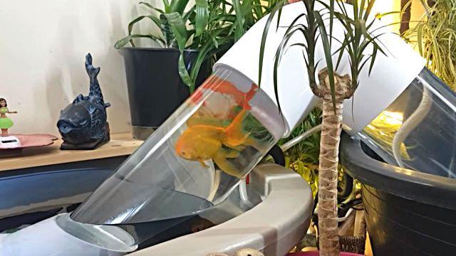 goldfish0