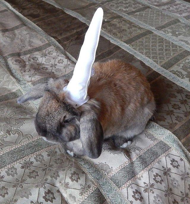 Unicorn-Bunny-Fashion-Rabbit-S2018_e